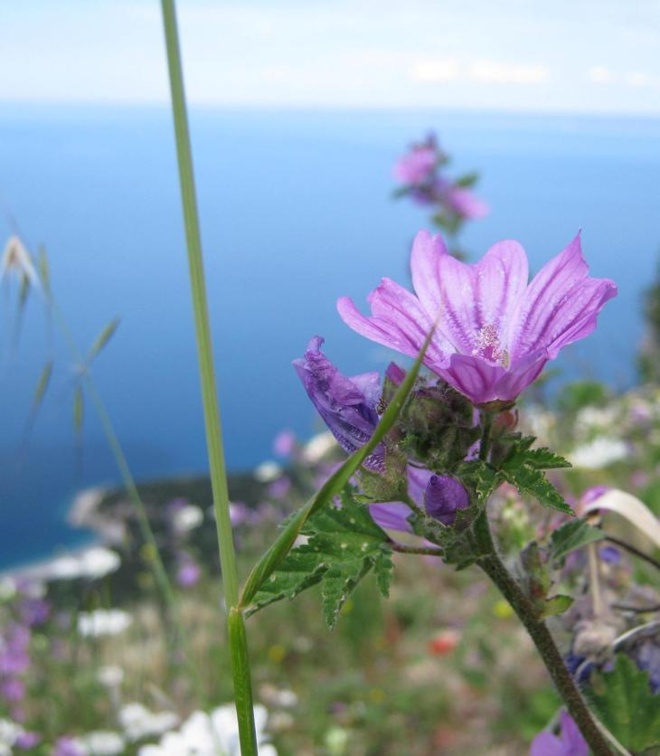 cvijet_1
